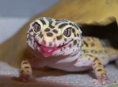 這世界上竟然有會拍照的蜥蜴!?真是太可愛了XDDD